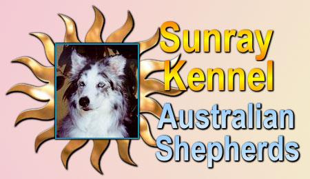Australian Shepherds Good Cats Australian Shepherd Tips To ...